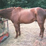 Lyme Disease and Horses